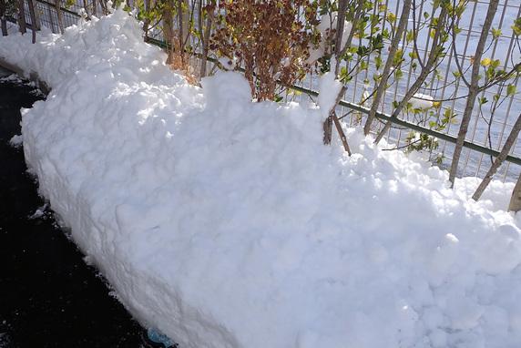 雪とサナギ