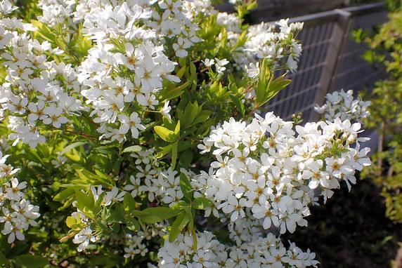 開花中の庭の花