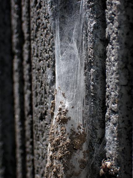 ジグモの巣
