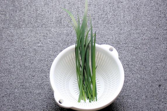 ニラの初収穫