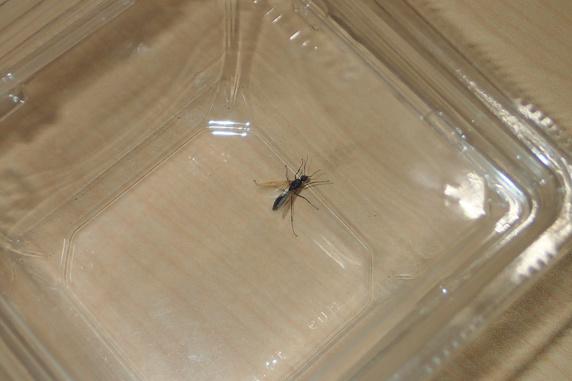 羽アリが部屋に侵入